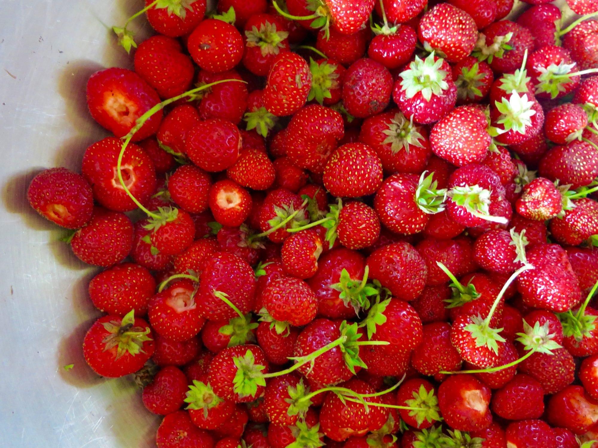 Freshly Picked Strawberries   Jessie Sheehan Bakes