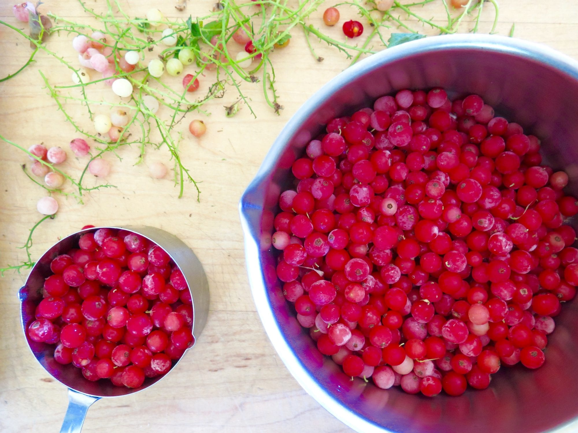Bowl of red currants | Jessie Sheehan Bakes